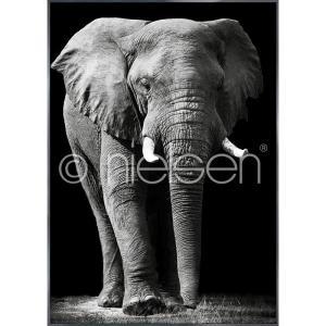 """Beeld met lijst """"Elephant black and white"""" met lijst van aluminium Alpha"""