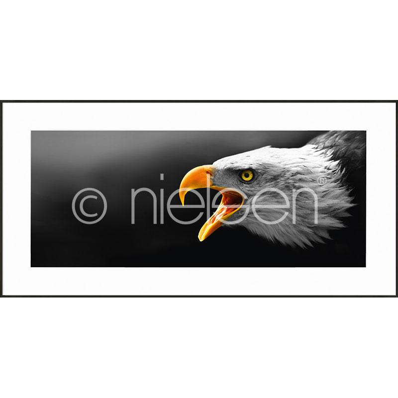 """Beeld met lijst """"Eagle"""" met lijst van aluminium C2"""