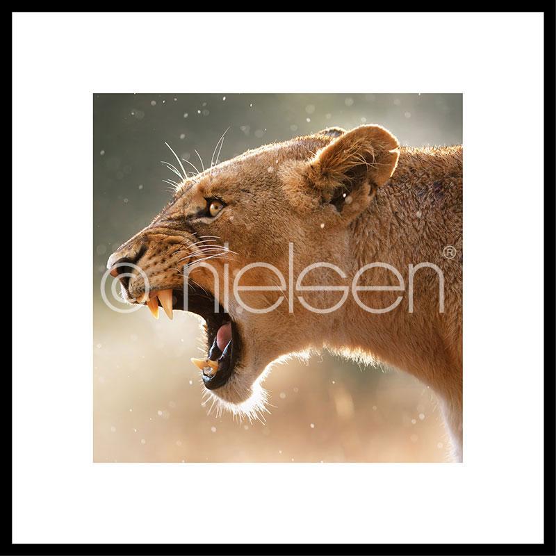 """Beeld met lijst """"Lioness"""" met lijst van aluminium C2"""