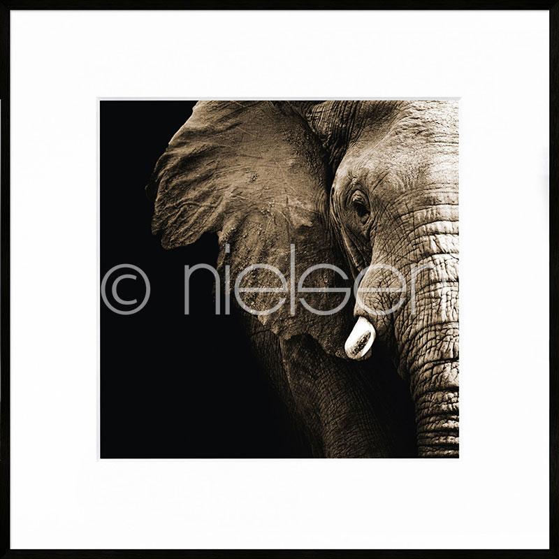 """Beeld met lijst """"Elephant"""" met lijst van aluminium C2"""