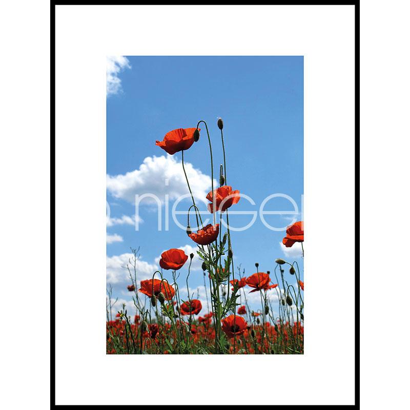 """Beeld met lijst """"Field of Poppy Flowers"""" met lijst van aluminium C2"""