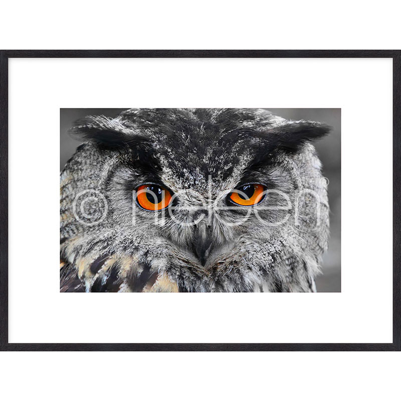 """Beeld met lijst """"Owl"""" met lijst van hout Quadrum"""