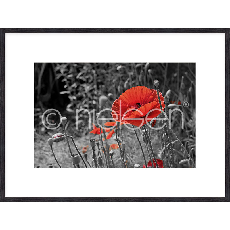 """Beeld met lijst """"Red Poppy Flower"""" met lijst van hout Quadrum"""